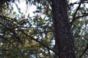 2012-8-Bird-in-Tree